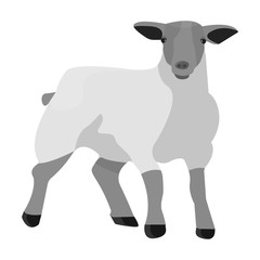 Little white mountain sheep.Scottish fold sheep.Scotland single icon in monochrome style vector symbol stock illustration.