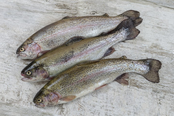 Trout freshly caught in a white colander with one outside