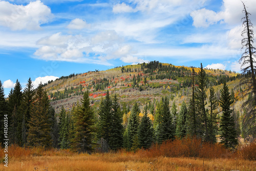 Wall mural Fall Colors in Ashley National Forest
