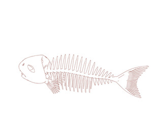 Fish skeleton. Isolated on white background. Vector outline illustration.