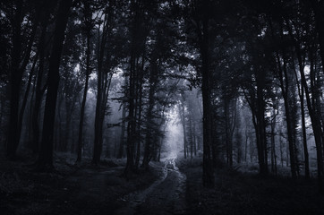 Night in scary dark forest. Surreal Halloween landscape