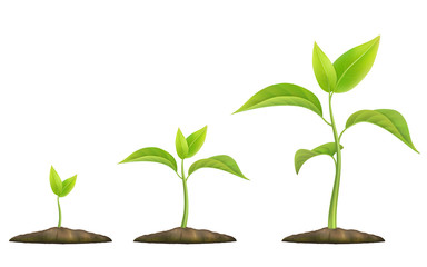 Stages of plant growth. Green sprout grows from the ground. Realistic vector illustration. It symbolizes life and development and ecology. Fototapete