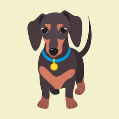 Cute domestic dog dachshund breed on the white background. Vector illustration