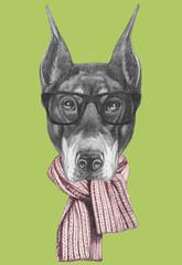 Portrait of Doberman Pinscher with scarf. Hand drawn illustration.