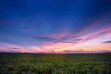 Coucher de soleil sur la plaine d'alsace