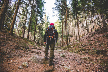 hiker walking on a mountain trail in the woods - wanderlust travel concept with sporty people at excursion in wild nature - outdoor activity italian Alps Italy