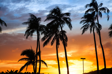 Palm trees at sunset.