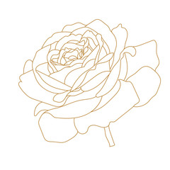Golden flower rose vector outline icon. Creative Luxury Fashion logotype concept icon. Vector.