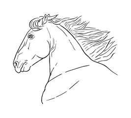 Line drawing of a horse's head on a white background. Running horse head, realistic vector illustration, black and white outline.