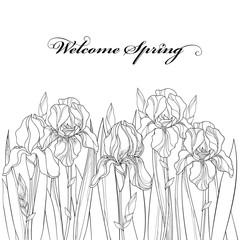 Vector horizontal border with outline Iris flower, bud and leaves in black isolated on white. Ornate floral element for spring and summer design, coloring book. Bouquet of Irises in contour style.