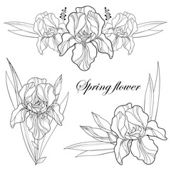 Vector set with outline composition of Iris flower, bud and leaves in black isolated on white. Ornate floral element for spring or summer design, greeting, coloring book with Irises in contour style.