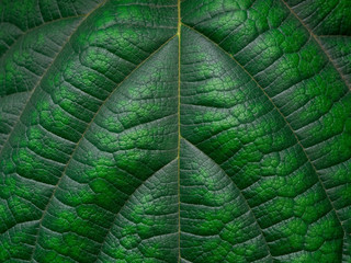 Green leaf texture. Leaf texture background. Copy space.