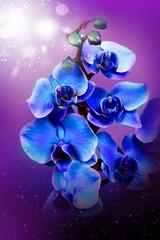 Beautiful blue flowers orhid in garden