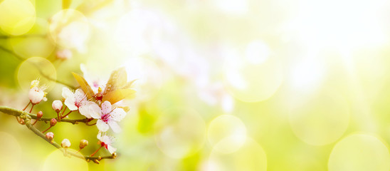 Fototapete - abstract Spring flower background; Easter landscape
