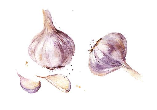 Watercolor garlic