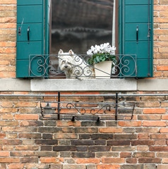 Beautiful window on the ancient wall and small dog - Venice, Italy