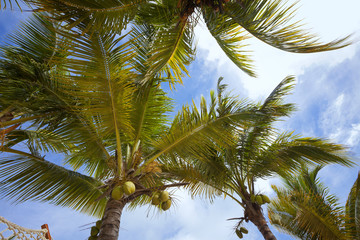 Coconut palm trees at the luxurious five stars holiday resort on tropical paradise island
