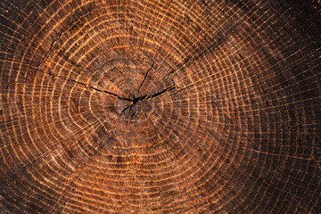 Large cut piece of wood stump. Distressed wooden tree trunk knot texture with annual rings