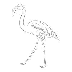 Hand drawn flamingo black outline sketch. Vector illustration