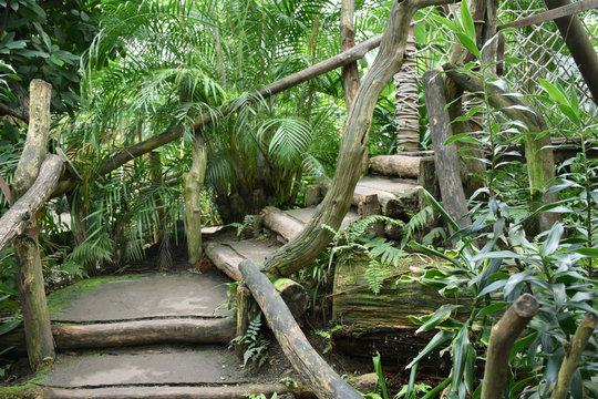 Leipzig Germany - Stairs in Gondwanaland of the Leipzig Zoo indoor