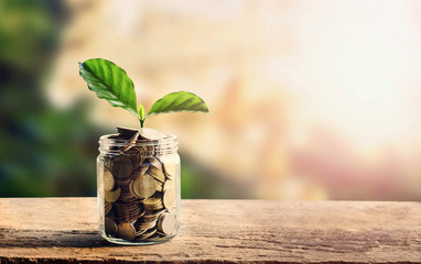 concept money saving coins in jar and small tree