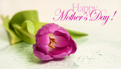 Mothers day background with tulip flower and Happy mother's day text