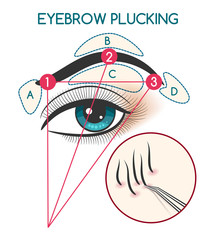 Eyebrow plucking vector illustration. Tweezing eyebrows diagram with eye and brow