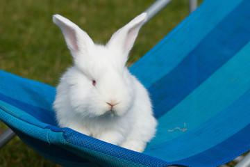 Kaninchen Baby Deutscher Riese