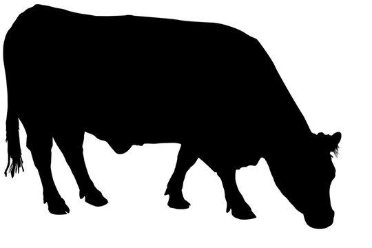 silhouette de vache