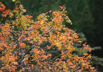 Wall Mural - Beautiful Fall Colors
