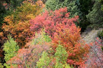 Wall Mural - Wonderful Fall Colors