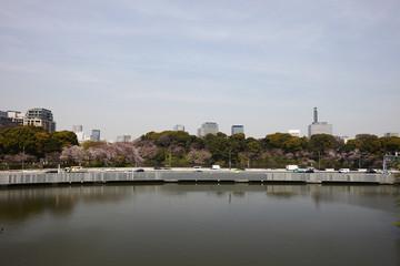 東京千鳥ヶ淵 満開の桜