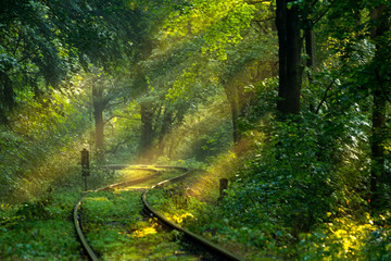 Railways in the forrest. Calmng and positive
