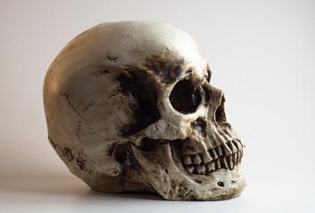 Right Facing skull profile