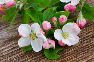 Apple tree white and pink blossom with green leaves on wooden rustic background