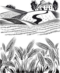 Landscape country, of ripe wheat ears swaying in the summer breeze.