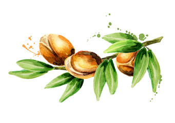 Branch of the argan tree, can be used as a design element for the decoration of cosmetic or food products using argan oil. Hand-drawn watercolor sketch