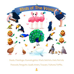 "Poster ""Birds of the World"". Addition series English ABC Amusing Animals."