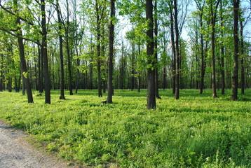 Velykoanadolskyi Forest, Donetsk region, Ukraine. Beautiful forest landscape