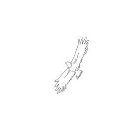 Sketch of an eagle in flight on a white background.