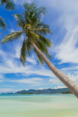 Palm tree on the beach, blue sky. Tropical, Thailand, Samui