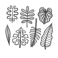 Vector set of leaves of tropical plants. Hand drawing of of tropical leaves