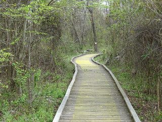 Boardwalk Path into the Swamp