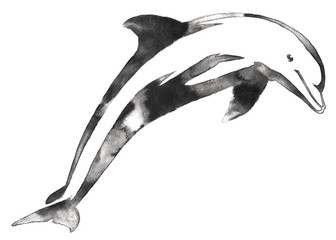 black and white monochrome painting with water and ink draw dolphin illustration
