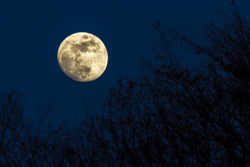 Full yellow moon with dark blue sky over a forest