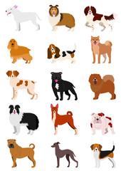 medium dog breeds  set isolated on white