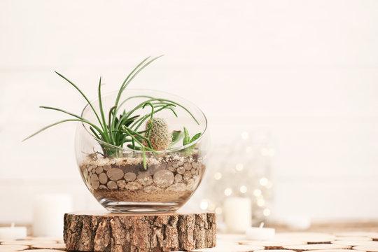 Mini succulent garden in glass terrarium on wooden stand