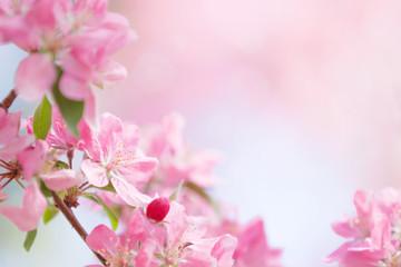 Tree flowers spring blossom