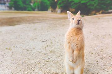Wild rabbit in a field
