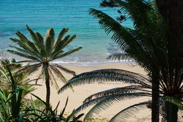 Foliage of Cycas trees with sandy beach shore in background, Bourail, Grande Terre island, New Caledonia, south Pacific